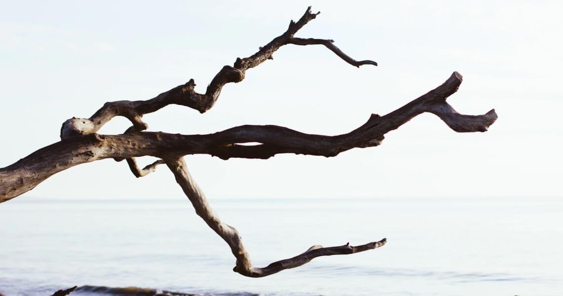 Branching – Alternativen durch Verzweigung